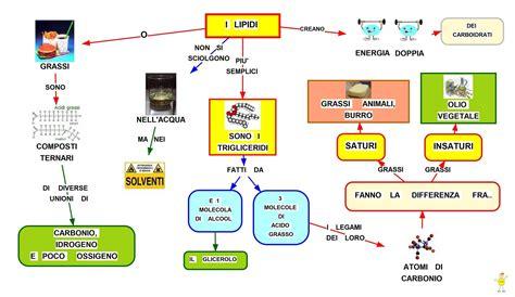 biochimica alimentare mappa concettuale lipidi