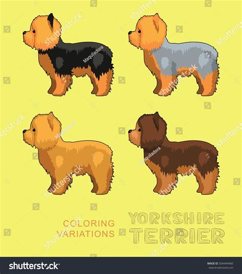 yorkie color variations terrier coloring variations vector stock vector 504444460