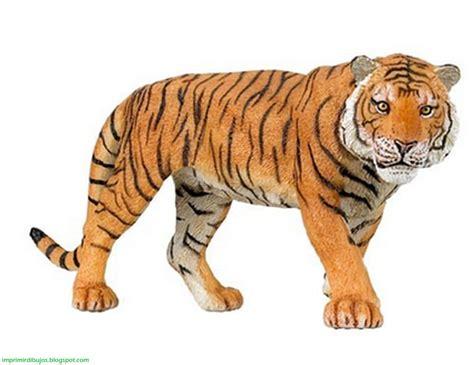 imagenes de animales de la selva para imprimir imprimir dibujos animales de la selva para imprimir y