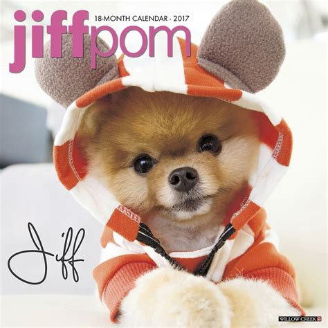 jiff pomeranian for sale jiff the pomeranian 2017 wall calendar 9781682343371 calendars