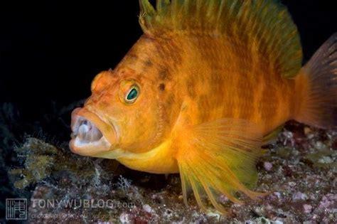 Obat White Spot Ikan Hias Laut White Spot Die 30ml gambar gambar ikan hias air laut yang lengkap nama nama hewan