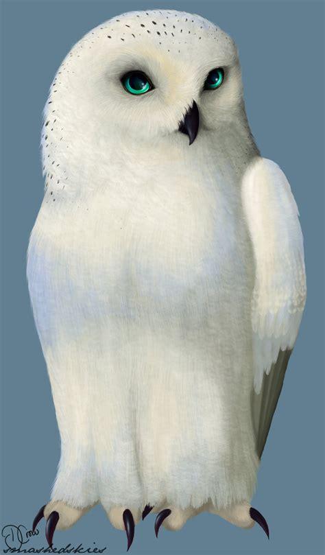 Piyama Owl Blue Piyama Owl lilett bubo snowy owl by smashedskies on deviantart