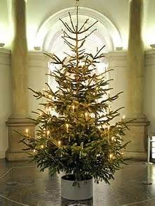 german tree lights german inspired tree goes on display at s