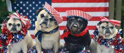 patriotic pug patriotic pugs pets pup