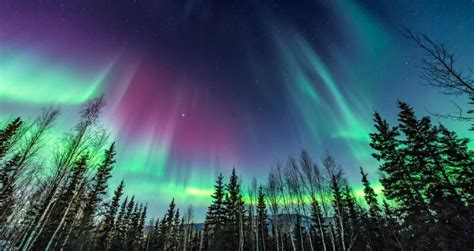of alaska northern lights northern lights in alaska destinations tours