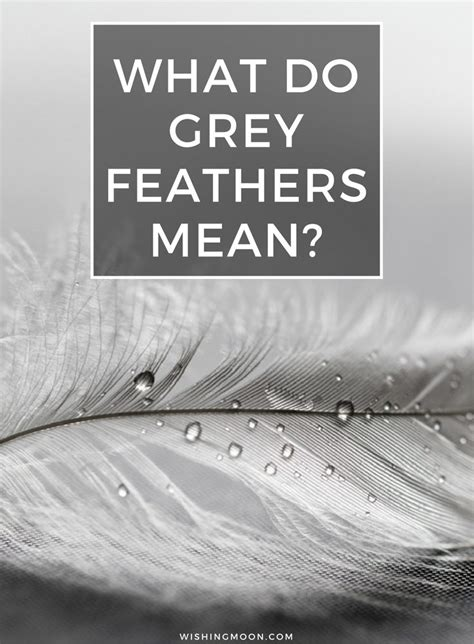 grey color meaning what do grey feathers wishing moon