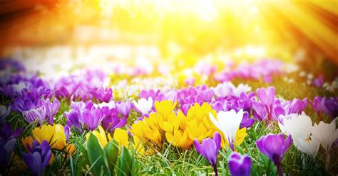 spring start when is the start of spring find out the official and