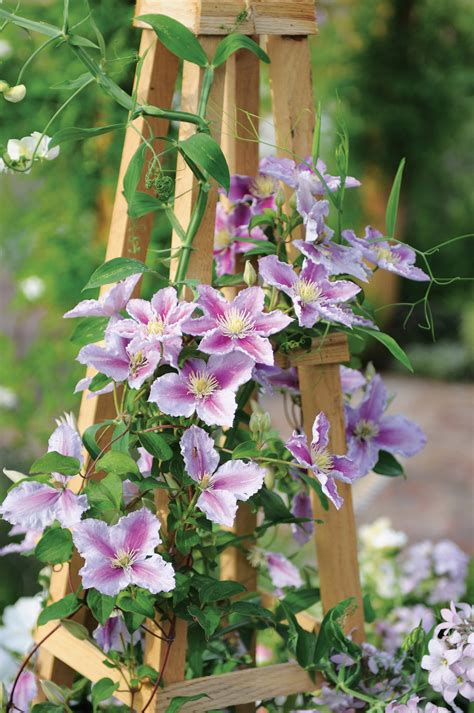 types of flowering plants newest home lansdscaping ideas