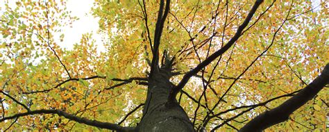 why the tree why is a tree so important for our planet n2e org