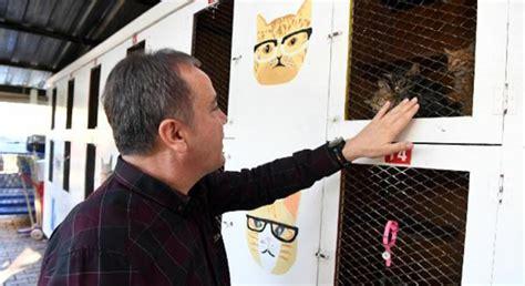 konyaaltı belediyesi kedi barınağı inşasına başladı