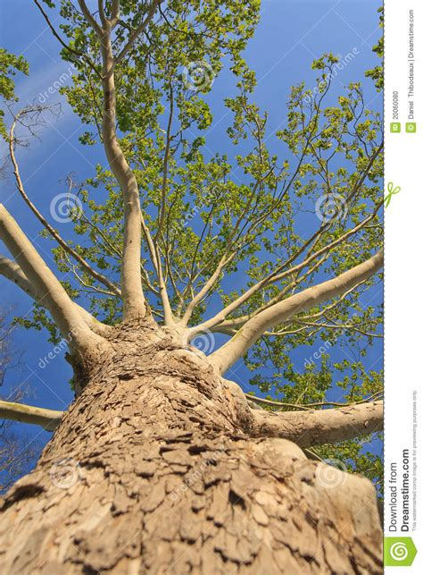 Photo Lookup Lookup Up Stock Photo Image 20060080