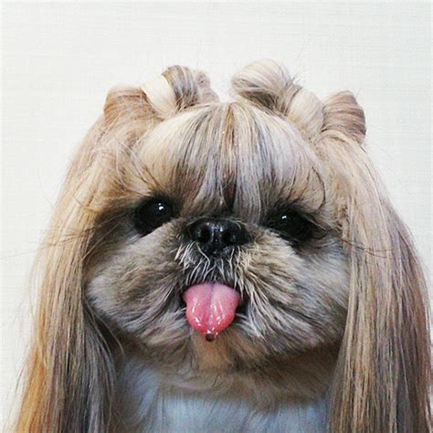 dog hair styles new haircut every day this dog gets a new hairstyle bored panda