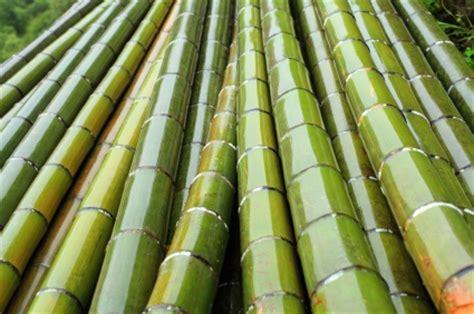 how to start a profitable backyard plant nursery pdf how to start a backyard bamboo nursery for 800 profitable plants