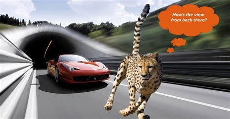 is a jaguar faster than a cheetah speed thrills meet the animal that can outsprint your