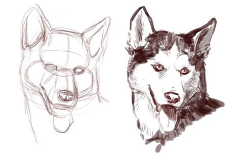 dogs to draw how to draw a jaddid hd wallpapers backgrounds images photos places to
