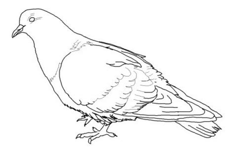 coloring page elementary library pinterest mo willems nonsensical pigeon coloring pages mo willems pigeon