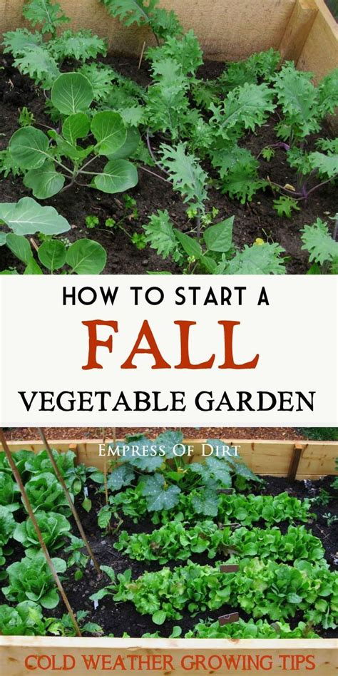 6 Tips For Growing Winter Veggies Winter Vegetable Gardening