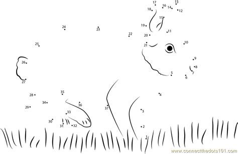 printable rabbit dot to dot eastern cottontail rabbit dot to dot printable worksheet