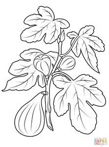 coloring page of a fig tree fig plant coloring page free printable coloring pages