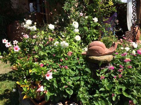 quali piante mettere in giardino la finestra di stefania piante mettere in un aiuola