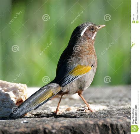 wwwwild bird photocom3gp bird on ground stock photo image of closeup 9471722