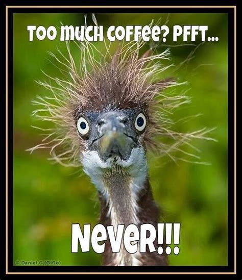 Too Much Coffee Meme - too much coffee meme chris the story reading ape s blog
