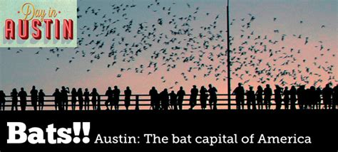 60 beautiful bat facts a handy guide for writers the bat curious books visit s bridge of bats