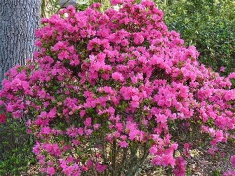 8 Cool Gardening Blogs by 4 Azalea Bushes 8 Cool Gardening Blogs Lifestyle