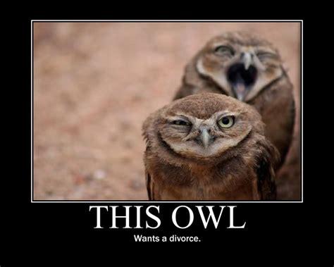 Art Owl Meme - owl poster 3 by earthy rah on deviantart