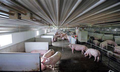 Modern Open Floor House Plans by Building A Better Pigpen Modern Farmer