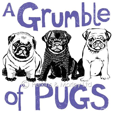 a grumble of pugs grumble of pugs greetings card pack of 6 perkins and morley ltd