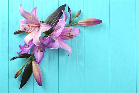 un mondo di fiori florablog un mondo di fiori floraqueen italia
