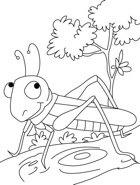 coloring page grasshopper grasshopper coloring pages for kids preschool and