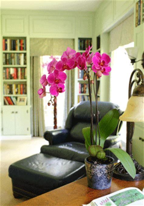 orchid care basics temperature