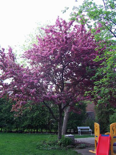 best trees for backyard trees for small backyards large and beautiful photos