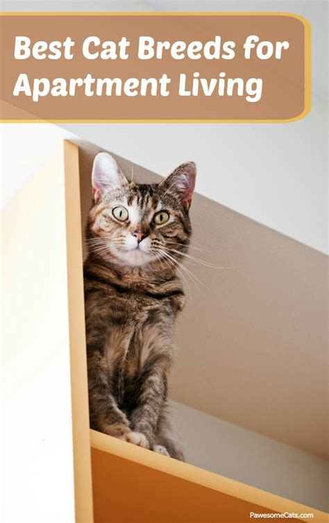 best breeds for apartments apartment living for cats 28 images best pets for apartments petmd homebodies