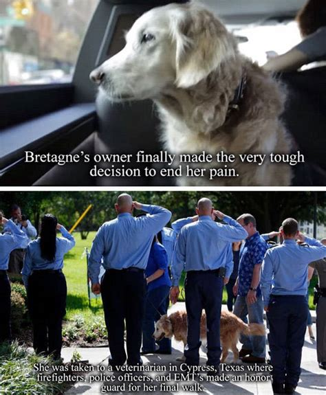 Animal Rescue Tribute by A Tribute To Bretagne The Last 9 11 Rescue Animals