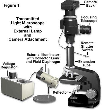 light source microscope function molecular expressions microscopy primer anatomy of the