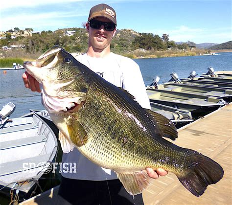bass boat rental san diego monster alert 16 3 pound bass caught at lake wohlford