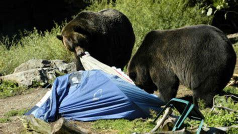 tear appart the gear needed to bear proof a csite die hard survivor