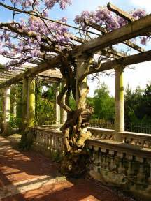 How Do You Pronounce Pergola by Pergola Definition Meaning