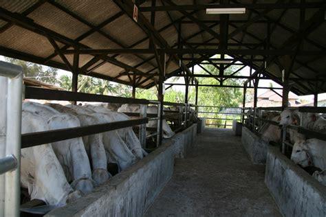 Penghilang Bau Kandang Ternak macam macam cara menghilangkan bau kotoran di kandang