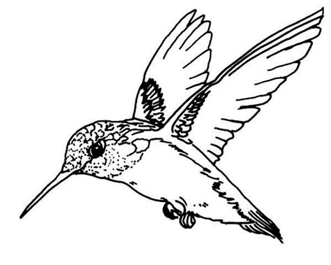 Hummingbird Outline by Hummingbird Coloring Pages Welcome Bingo Slot Machines Hagio Graphic Info