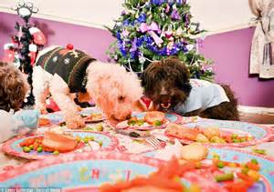 dogs dinner the pooches who ll 163 1k spent on their festive celebrations daily mail