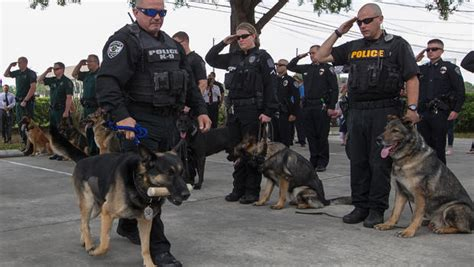 K9 Officer by Lay Beloved K9 To Rest In Emotional Ceremony Cbs News