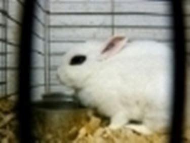 gabbie per coniglietti nani gabbie conigli nani conigli nani