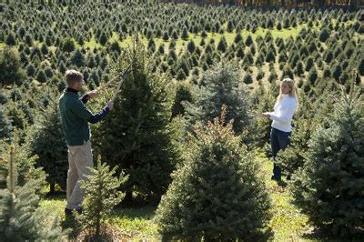 how long to grow a christmas tree christmas decore