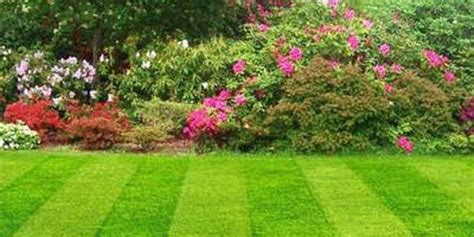 late summer lawn care late summer lawn care top 28 june gardening tips summer