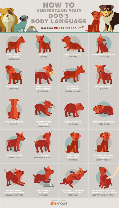 puppy language all of your s language finally explained infographic