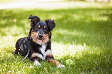 how do dogs sweat how do dogs sweat faqs dogs guide omlet uk